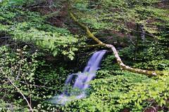 Catarata en el bosque (Vika Scrivener) Tags: naturaleza verde hojas agua bosque monte catarata cascada