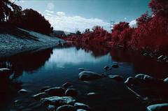Gone Fishin' (analoguefilm) Tags: analog 35mm river la losangeles fishing kodak infrared e6 colorinfrared analogphotography lariver minoltax570 aerochrome