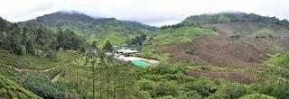 cameron highlands- malaisie 33