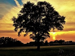 Fire Sky (Mado AwaD) Tags: sunset sky orange sun plant tree field skyline clouds landscape ma belgium belgie outdoor dusk serene mado firesky