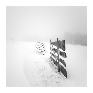 ~white light at the fence line~