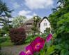 WKO_6921.jpg (banjo-kiel) Tags: rosen föhr reetdachhaus