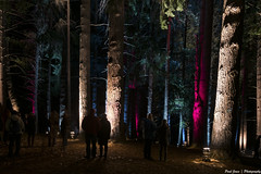 LUMA 2016 Queenstown, NZ (.Paul Jones.) Tags: trees light newzealand queenstown luma 2016 luma16