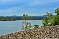 Moonshine Beach (David Davila Photography) Tags: vacation tree water outdoor mo missouri branson geotag 2016 tablerocklake moonshinebeach nikond800 holuxm241