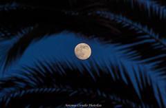 Mooneye (Antonio Ciriello) Tags: moon eye luna occhio palme palms cielo sky sanvito taranto puglia apulia italia italy canoneos600d canon eos600d 600d rebelt3i 70300vcusd 70300vc 70300 tamron70300vc tamron