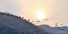DSC_0025 (rachidH) Tags: nepal lake mountains nature birds pokhara fewa phewa annapurna himalayas oiseaux rachidh