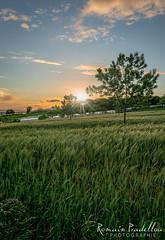 Champ de bl (Romain Pradellou) Tags: sunset nature champ correze coucherdesoleil bl
