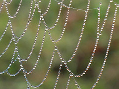 spiderweb and dew drops (Hayseed52) Tags: droplets pattern dew webs spicers