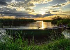lake sonata II (Mris Pehlaks) Tags: sunset summer sky lake nature birds clouds landscape boat duck outdoor horizon latvia procesing aluksne