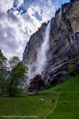 Staubbachfall (www.chriskench.photography) Tags: travel schweiz switzerland europe sheep suisse fujifilm bern lauterbrunnen ch 18135 xt1 kenchie wwwchriskenchphotography