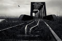 ribbon of darkness (Port View) Tags: bridge canada bird abandoned fog backlight train novascotia steel dar foggy tracks rail railway backlit gaspereauriver hortonlanding dominionatlanticrailway fujixe2