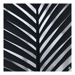 Diagonals (fearghal breathnach) Tags: patterns shapes symmetry monochrome blackwhite diagonals lines shadows squareformat square macro