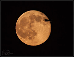 Airliner passing by strawberry moon (K-Szok-Photography) Tags: california moon canon socal canondslr lunar inlandempire strawberrymoon 50d canon50d sbcusa kenszok kszokphotography