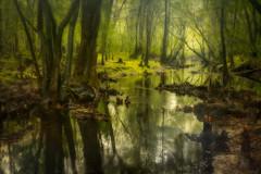 My Favorite Creek (MichaelSOwens) Tags: trees cypress knees blackwater acidic effect hdr orton blackcreek tupelo blackcoffee southeastgeorgia tanninstained coloroftea