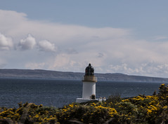 Islay 2016 2 (45) (Yorkshire Reckless & Proud) Tags: blue shadow sea people musician cloud sun lighthouse black bird beach birds silhouette vw landscape scotland boat ship harbour cottage sails tent islay seal duster van camper distillery orsay bowmore bruichladdich dacia