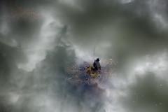 nubes espejo (Renate Bomm) Tags: summer bird animal wasser nest sommer natur wolken regen vogel pjaro 2016 blsshuhn 366 renatebomm