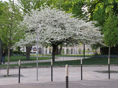 white (francesca.clemente) Tags: flowers light horse food france beer leuven cathedral champagne parking francesca taco electronics reims viaggi polo gatti burrito cagliari clemente foodtruck wildboar gambetta maredsous woinic francescaclemente clementefrancesca