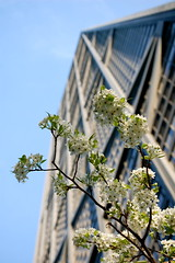 Spring in another city (Alice Olive) Tags: chicago cityscapes hancocktower springsummer aliceolive