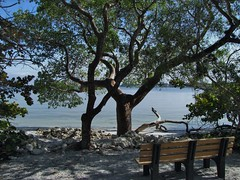 Gumbo Limbo Bench (Sharpj99) Tags: