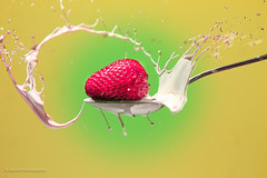 Strawberry Splash Challenge (Santos'Photography) Tags: milk strawberry mess cream spoon messy splash challenge strobist removedfromstrobistpool incompletestrobistinfo seerule2