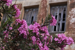 ... (Theophilos) Tags: old flowers windows town crete rethymno