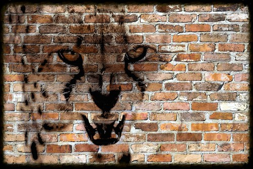 Cheetah Graffiti