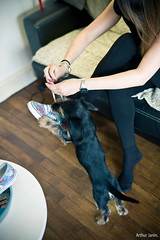 VANS vs. TOBI (Arthur Janin) Tags: leica light portrait dog chien puppy 50mm arthur natural lumire f14 vignettage vignetting summilux asph chiot teckel m9 janin poils aspherical durs