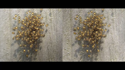 spiders - 3d movie clip - crossview