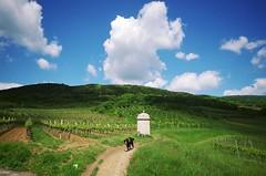 light and shadow... (Sandra Schmid Photography) Tags: light shadow sky clouds sterreich day cloudy himmel wolken vineyards bernesemountaindog niedersterreich bernersennenhund wasserleitung loweraustria weinberge sigma1020 pfaffsttten pentaxk30