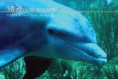 Are dolphins fish? (NOAA's National Ocean Service) Tags: ocean fish coast dolphin dolphins noaa nos seagrass fisheries nmfs nationaloceanservice nationalmarinefisheriesservice