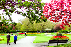 Colours in the Green (Steve-h) Tags: park pink flowers trees ireland ladies red people dublin men green nature grass yellow statue blog women europe candid blossoms magenta eire blogs bloggers blogging paths bandstand railings wheelbarrow allrightsreserved gardener ststephensgreen iphone5 steveh may2013 jaggr645proforiphone lightroom44