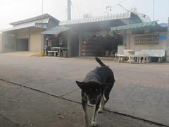 2013-03-27-20-18-31_613DF1A0-2C7B-46EB-92D7-40E1B5889F85 (offthebeatenboulevard) Tags: thailand orphanage volunteering maesot burmeseborder