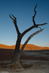 The Moon over Deadvlei (Cold Shutterhand) Tags: sesriem namibia sossusvlei deadvlei sossusdunelodge