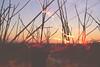 Noelle (k00k00kachoo) Tags: sunset portrait nature girl hair photography golden glow wind live free manipulation overlay explore observe breathe breeze noelle twigs connect braches oneness