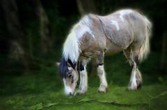 My Little Pony (pentlandpirate) Tags: horse cheshire pony siddington