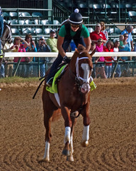 Will Take Charge (Derby Gal) Tags: horses horse race kentucky racing horseracing racehorse horserace kentuckyderby racehorses horsesports equestriansports
