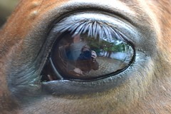 Looking at me,looking at you... (lora.cpx) Tags: cheval oeil
