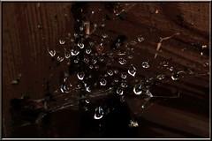 3. Juni 2013: Tropfen auf Spinnweben (Gertraud-Magdalena) Tags: juni drops raindrops tropfen frhling regentropfen