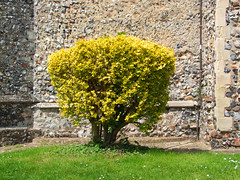 burning bush (Simon_K) Tags: nethergate saxlingham
