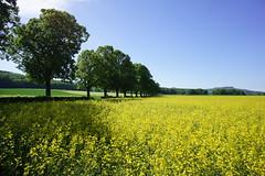 Lichtenfels landscape