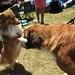 Expo canine et féline à l'hippodrome de Pornichet