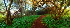 Chetco Point Park (Photo Extremist) Tags: park trees 3 oregon point path trail zen greens pathway chetco