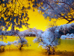 PATANO DE CUBILLA - GRANADA - ESPANHA (Jos Brazil) Tags: espaa naturaleza espanha flickr foto natureza colores andalucia jardim infrared fotografia arvores camara imagem infravermelho colorido filtros infrarroja fotocolorida filtrobw josebrazil filtroinfravermelho