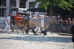 trekpaardkeuring ijzendijke 21072013 3842 (jo_koneko_san) Tags: horses horse holland netherlands cheval nederland zeeland chevaux paard hollande zeeuwsvlaanderen 2013 ijzendijke parden trekpaard zeeuwstrekpaard trekparden