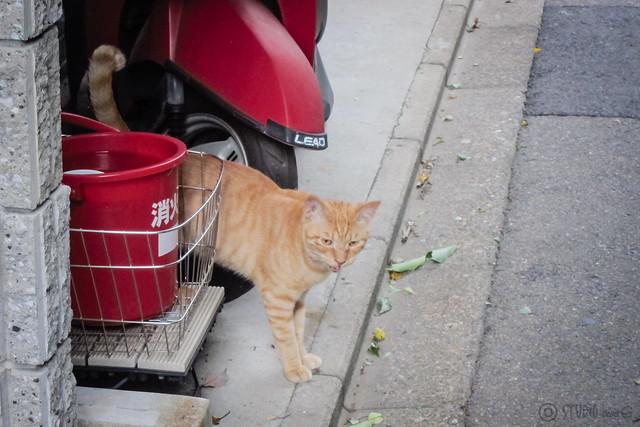 Today's Cat@2013-09-14