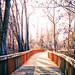 150131-walkway-path-boardwalk-woods.jpg