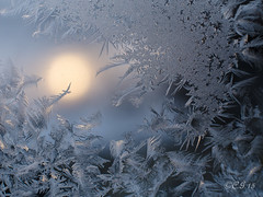 Frost (claudiaulrikegoodall) Tags: