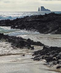 "Sheen (ggppix) Tags: ocean reflection beach rock lava islands bay ecuador sand pacific charlesdarwin skeletons whitesand volcanic sheen equatorial equator archipelago galápagos captureonepro kickerrock chathamisland islasancristóbal sancristobalisland stephensbay fujifilmxpro1 garyglenprice fujinonxf18135f3556rlmoiswr rocaleóndormido ""voyageofthebeagle"" bahiastephens"