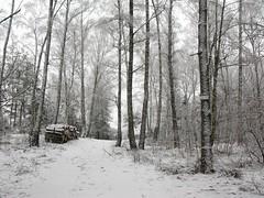 .... (Dorota.S - !) Tags: winter forest poland dorotas