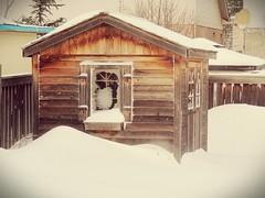 Backyard Cabin (AncasterZ) Tags: winter snow canada cabin backyard nikon coolpix p340